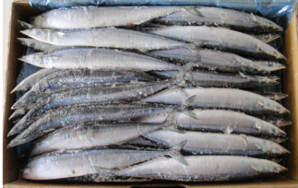 bulk Frozen spanish fish
